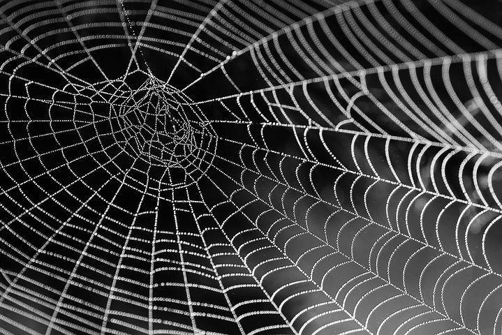 избавиться от пауков
