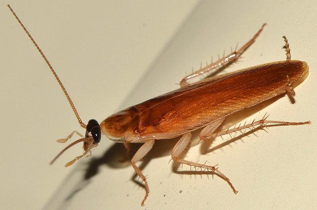 избавим ваш дом от тараканов