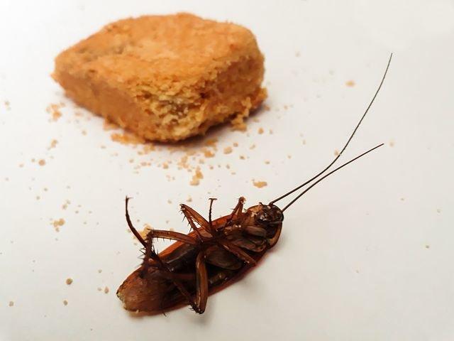 качественная отрава от тараканов